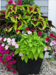 container-gardening-2