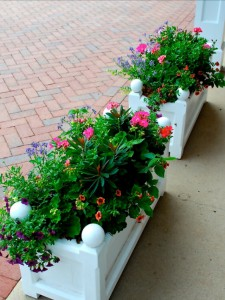 container-gardening-6