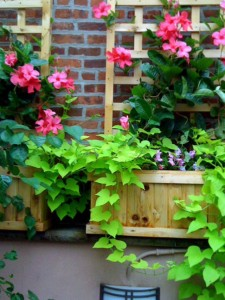 container-gardening-9